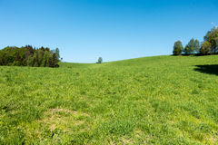 Spring countryside with meadow, trees and blue sky Stock Image