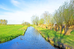 Spring in the countryside from Netherlands Royalty Free Stock Images
