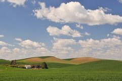 Spring Countryside scene in Colfax. Countryside scene in spring near Colfax in Washington State stock image