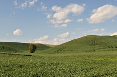 Spring Countryside scene in Colfax. Countryside scene in spring near Colfax in Washington State stock photography