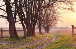 Spring countryside sunset. Old country road in the park Royalty Free Stock Image