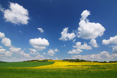 Spring countryside with yellow dandelions