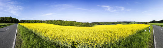 Spring countryside of yellow rapeseed fields in bloom Stock Photo