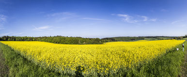Spring countryside of yellow rapeseed fields in bloom Royalty Free Stock Photos