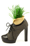 Spring creative concept with fresh grass and boot with high heel Stock Photos