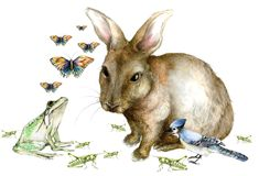 Spring Creatures Background Royalty Free Stock Images