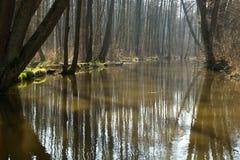 Spring creek Royalty Free Stock Photos