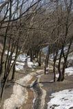 Spring creek stock photo