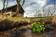 Spring creek with buttercups stock photography