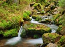 Spring creek Royalty Free Stock Photo