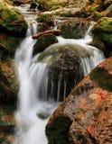Spring creek Stock Photography