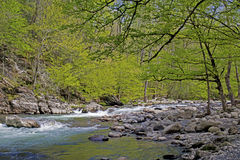 Spring creek in the Great Smoky Mounatins. Royalty Free Stock Images