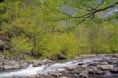 Spring creek in the Great Smoky Mounatins. Royalty Free Stock Image