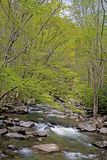 Spring creek in the Great Smoky Mounatins. Stock Photography
