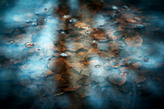 Spring creek and last year`s leaves. Stock Photo