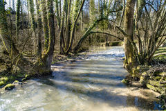 Spring on creek Royalty Free Stock Image