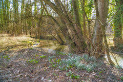 Spring on creek Royalty Free Stock Images