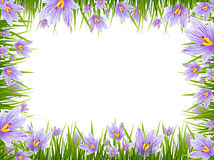 Spring Crocus Border. Illustration of Spring Purple Crocus Border, Copyspace Royalty Free Stock Photography