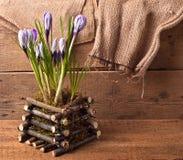 Spring Crocus flowers Stock Image