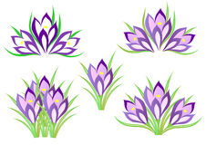 Spring crocuses Stock Photos