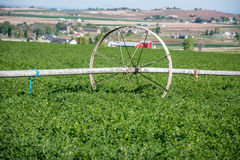 Spring crops with a wheel of irrigation sprinkler Stock Photography