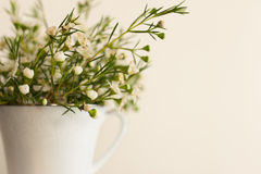Spring in a cup Royalty Free Stock Images