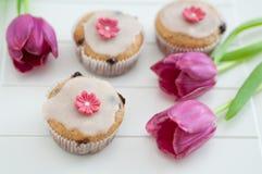 Spring Cupcakes Stock Photos