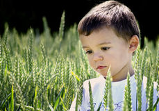 Spring cute boy Royalty Free Stock Images