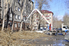 Spring cutting of trees in the city. Tyumen. Stock Photo