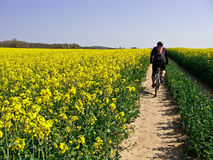 Spring cycling. Spring dirt path cycling with green meadows and fields. Biker figure of a man visible Royalty Free Stock Photo