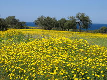 Spring in Cyprus royalty free stock images