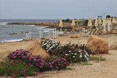 Spring in Cyprus. Flowers near the sea Stock Photo