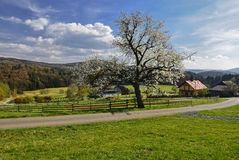 Spring in the Czech countryside. Blooming cherry tree in a remote area in the hills Stock Photo