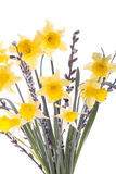 Spring daffodil flowers isolated over white Stock Photo