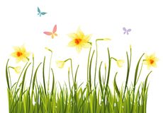 Free Spring Daffodils Stock Images - 13307844