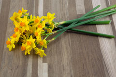 Spring daffodils. Small bright yellow narcissus daffodils Royalty Free Stock Images