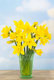 Spring Daffodils. Bunch of spring daffodils in rustic setting royalty free stock image