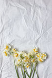 Spring daffodils bouqet on the white craft paper background Stock Images
