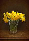Spring Daffodils Royalty Free Stock Photo