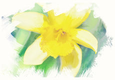 Spring daffodils in garden, vintage watercolor effect Royalty Free Stock Photography