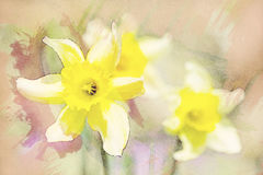 Spring daffodils in garden, vintage watercolor effect Stock Photo