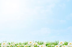 Spring daisies. Spring and easter border with daisies on blue sky background stock photos