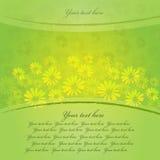 Spring daisies Stock Photos