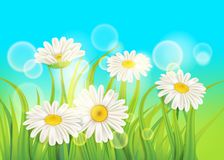 Free Spring Daisies Background Fresh Green Grass, Pleasant Juicy Spring Colors, Vector, Illustration, Template, Banner Royalty Free Stock Images - 139765129