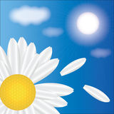 Spring daisies on a background of sky. Vector Stock Image