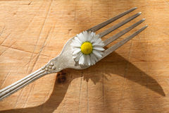 Spring daisy and cutlery on wooden boards Stock Images