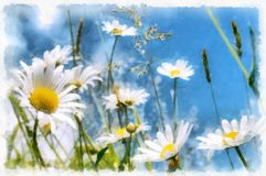 Spring daisy flower field vintage Stock Photography