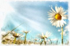 Spring daisy flower field vintage Royalty Free Stock Photo