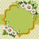 Spring daisy flower frame stock photo
