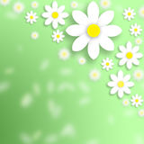 Spring daisy flowers background Royalty Free Stock Photography